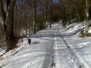 Neve (3)
